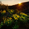 Wild flowers in the Boise foothills at sunset