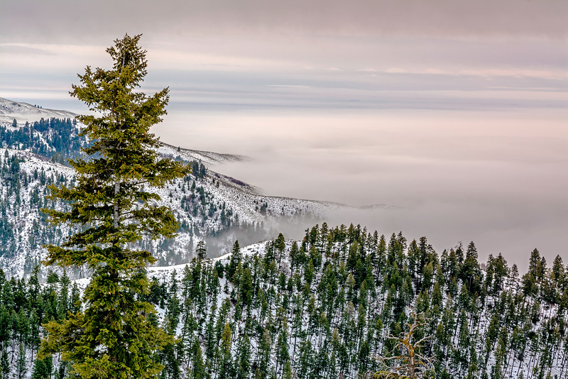 Forest in Idaho with Inversion Fog