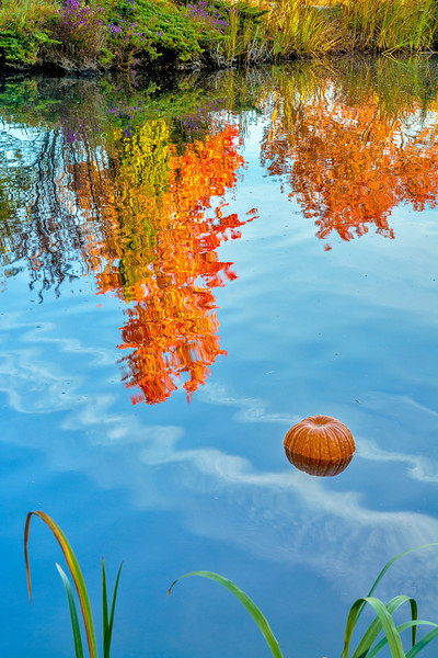 Pumpkin in Pond with Autumn Tree Reflections