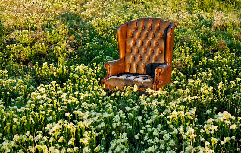 Abandoned Chair in a Field of Flowers
