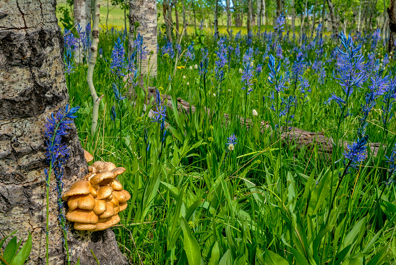 Forest Floor with Mushrooms and FLowers