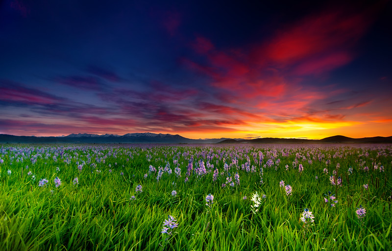 Dramatic sunrise over Centennial Marsh filled with Camas