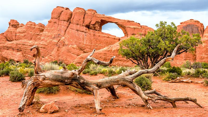 Log and Arch Moab, Utah