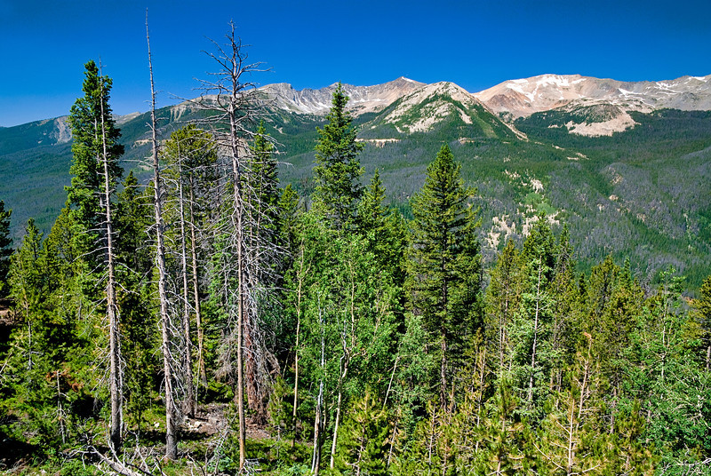 Forest in Colorado's Rocky Mountains