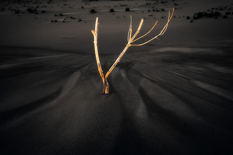 Sagebrush wood pokes through the sand of a dune