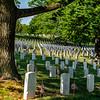 Hallowed ground underneath a tree at Arlington Cemetery