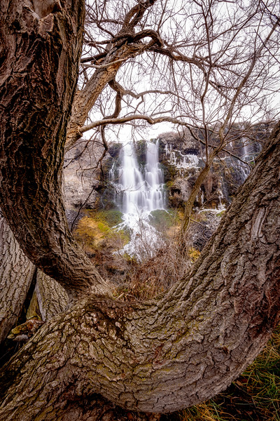 Wild Waterfall in Idaho framed by a large old tree