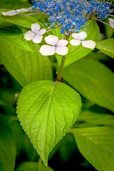 Flower in the famous SHUKKEIEN garden Japan