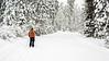 Falling snow on a ski trail in the Idaho mountains