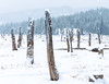 Tree snags rise from the cold show ground at Little Payette Lake near McCall Idaho