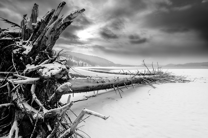 Large tree lays on ice covered Payette Lake winter with dramatic sky