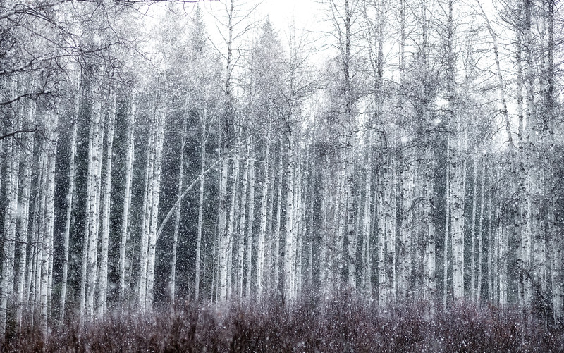 Aspen Snow Storm