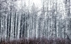 Aspen Snow Storm Ponderosa State Park