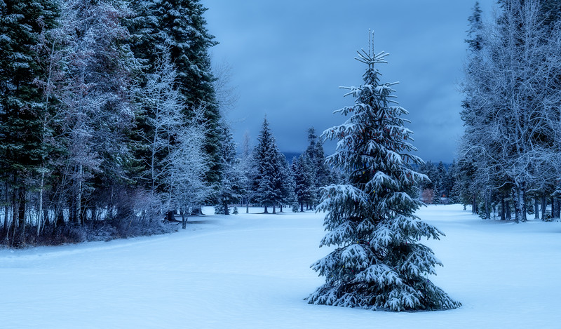 Green pine tree in a winter wonderland with snow and a forest