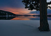 Pine tree sundown McCall Idaho