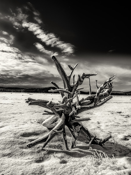 Tree stump on a winter lake bottom