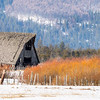 Country barn in Idaho winter with orange willow sticks and snow
