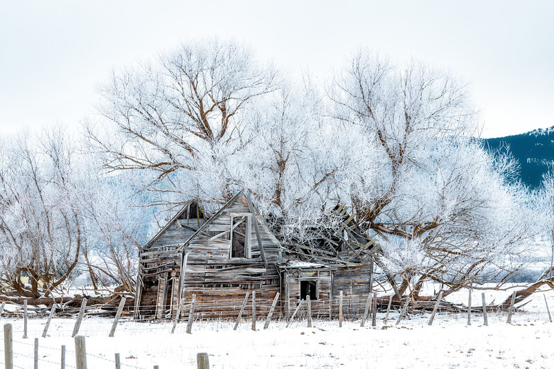 Wood cabin in winter crumbling under the weight of a huge tree