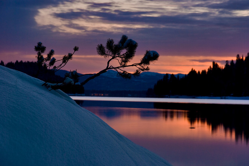 Orange sunset and pine limb Payette Lake Idaho