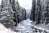 Upper Payette River near McCall with snow covered forest