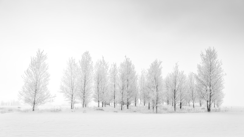Winter forest with frosted trees