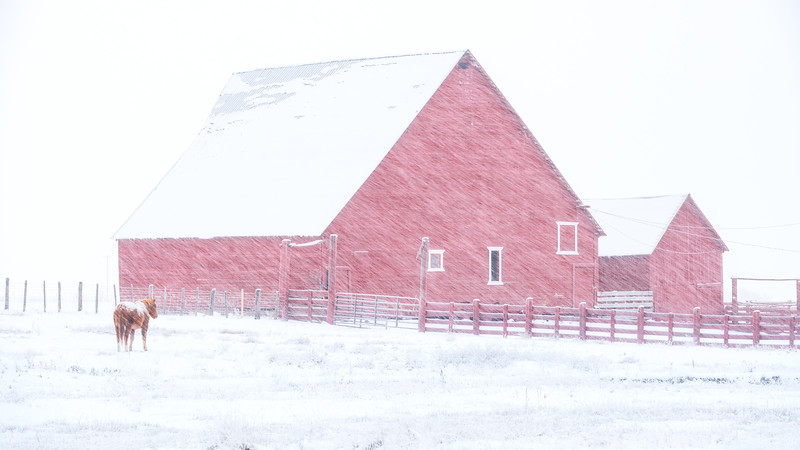 Winter barn with horse in the blowing snow