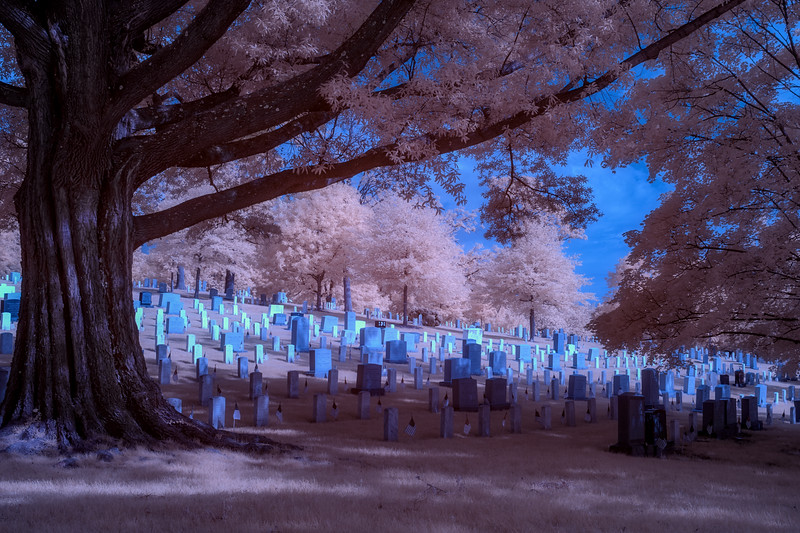Arlington Cemetery and tree Infrared