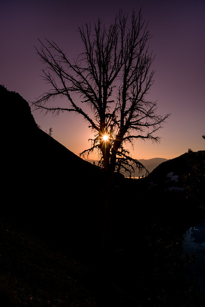 Tree silhouette and Sun Star Sawtooth Lake morning