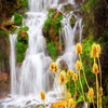 Yellow thistle weeds and a background waterfall