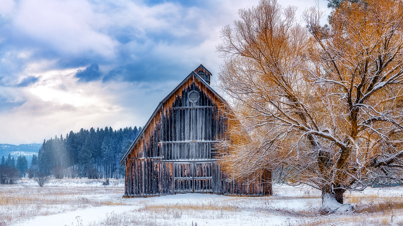 New Meadows Barn in winter with tree