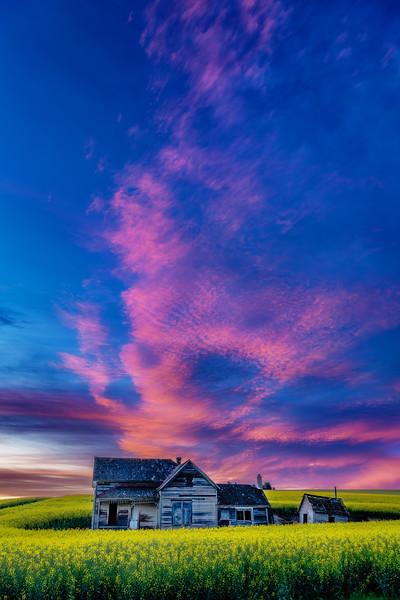 Abandon homestead at sunrise in a Canola field