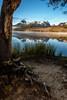 Little Redfish Lake with pine tree root sunrise