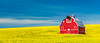 Red barn in a field of yellow Canola