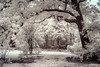 Tree arc at National Arboretum