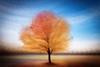 Autumn tree abstract into the setting sun