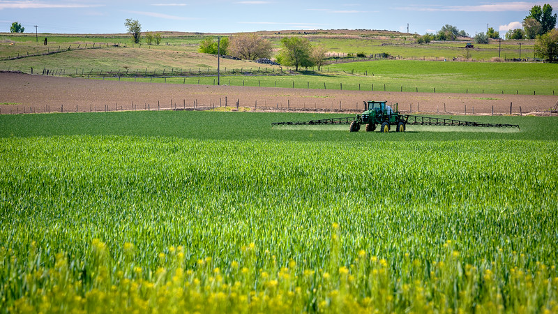 Tractor sprays crops in the spring