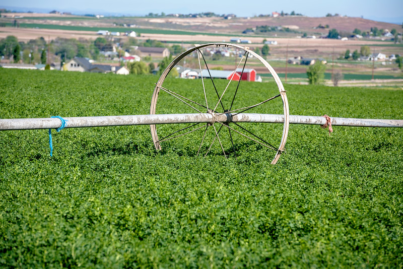 Spring crops with a wheel of irrigation sprinkler