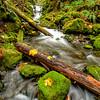 Gordon creek and Emerald Falls