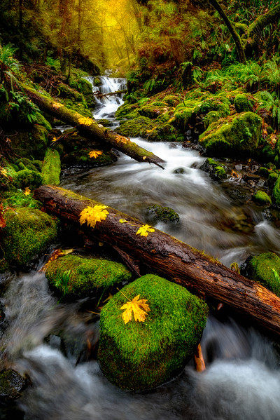 Gordon  creek falls with autumn leaves