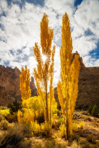 Fall trees in Leslie Gulch Oregon with a sun burst peaking through