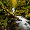 Emeralb creek falls with log in creek