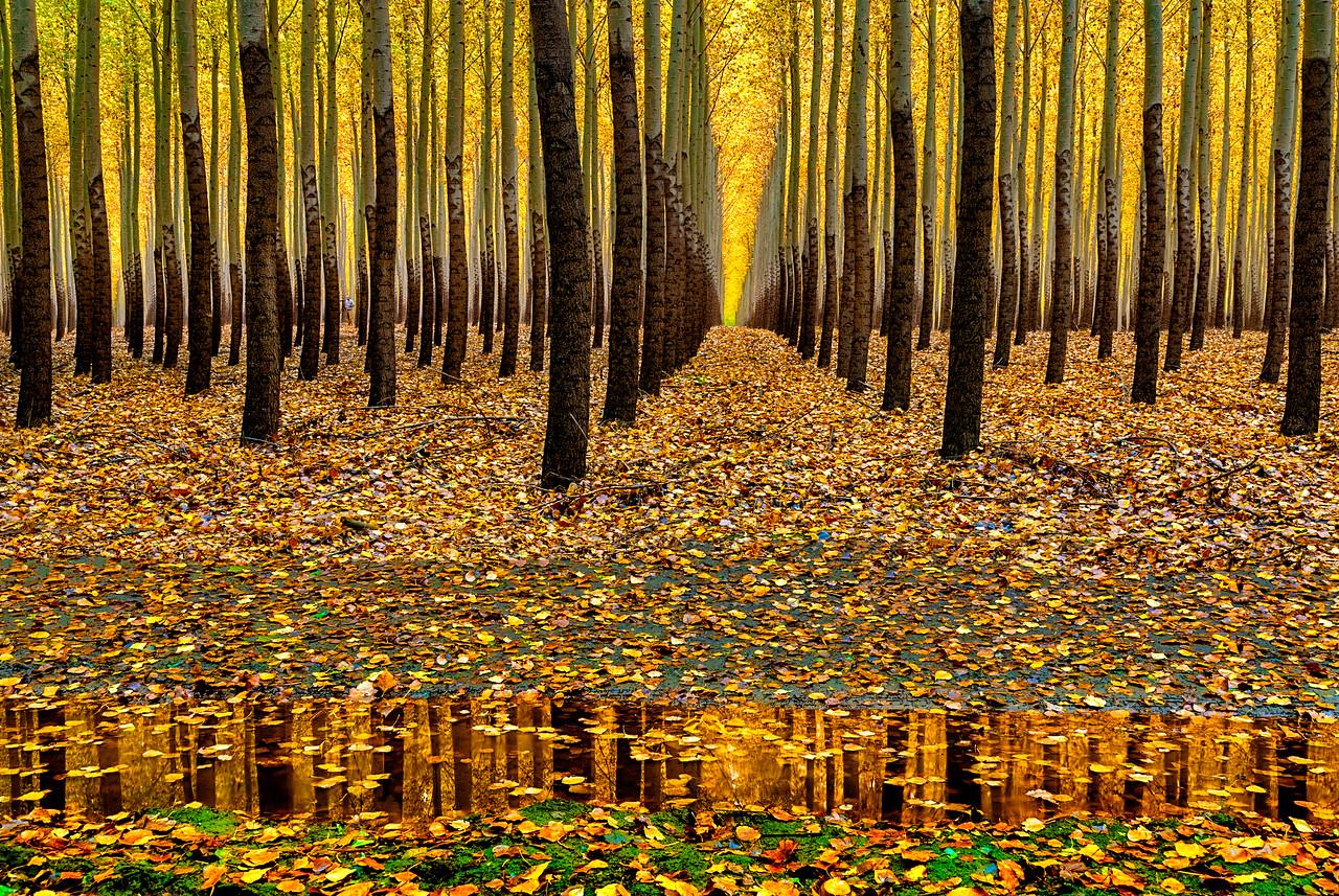 Autumn Tree Farm reflection