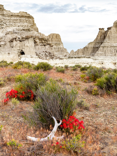 Indian Paint Brush and antler in the desert landscape