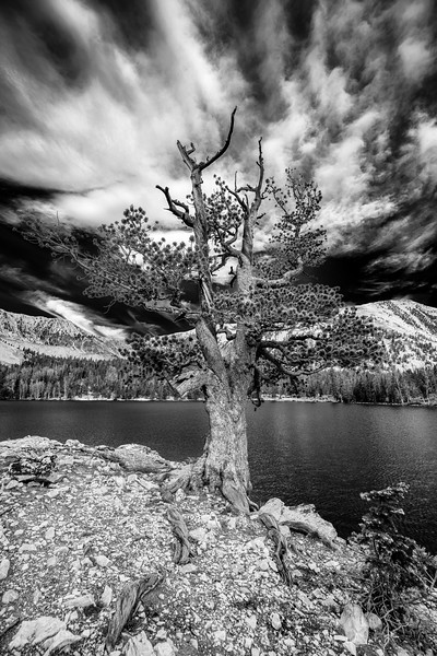 Old mature tree on a rocky outcrop on Meadow Lake in the Lemhi Rage Idaho