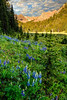 Dickey Peak with blue lupines