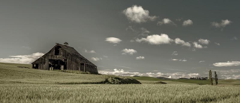Eastern Washington wheat field with an old barn