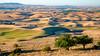 Beautiful wheatfields of the Palouse