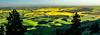 Palouse farmland with yellow Canola fields from Kamiak Butte