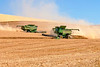 Farmers harvesting their whear with combines