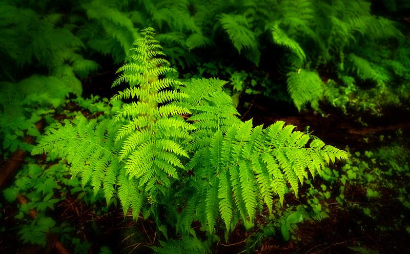 Green ferns on a dark forest floor